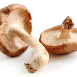 Mushroom Infused Olive Oil