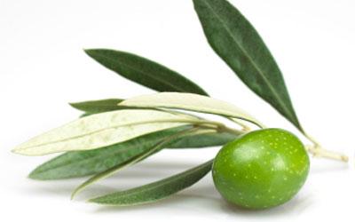 varietal-olive-oil