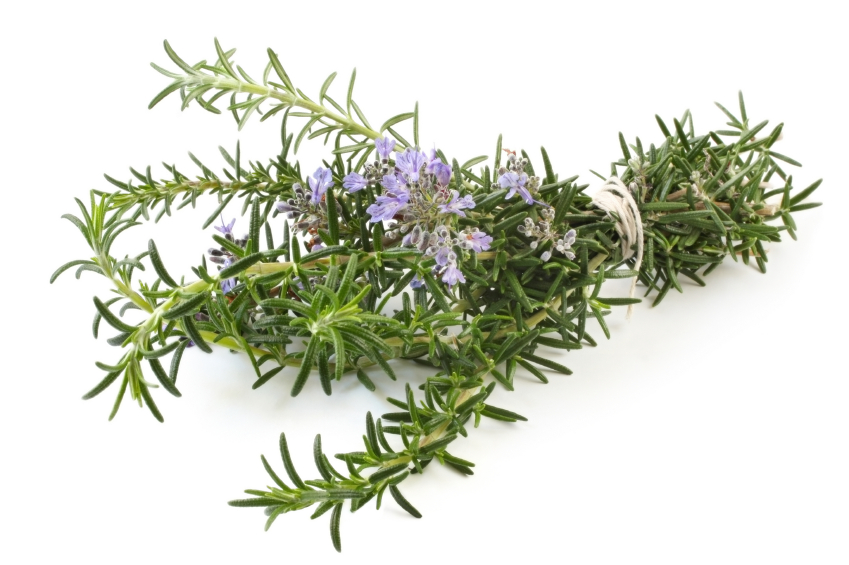 Bunch of flowering rosemary, tied with string.